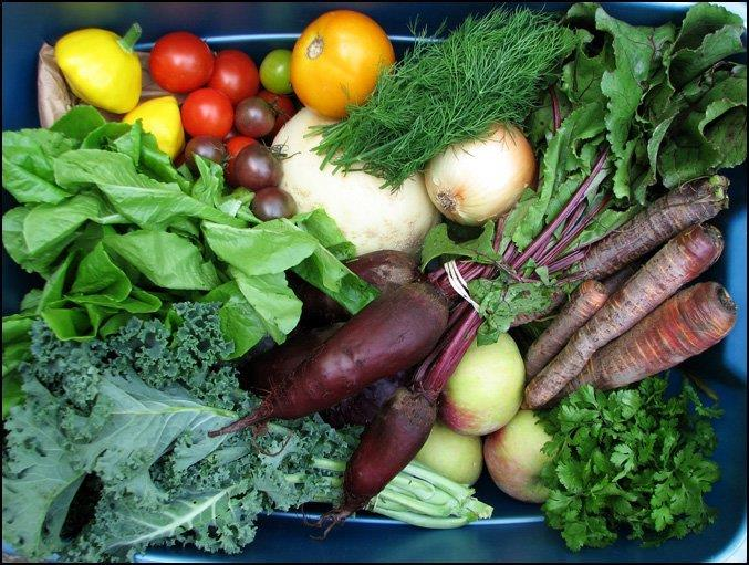 Egyptian vegetables banned from UAE